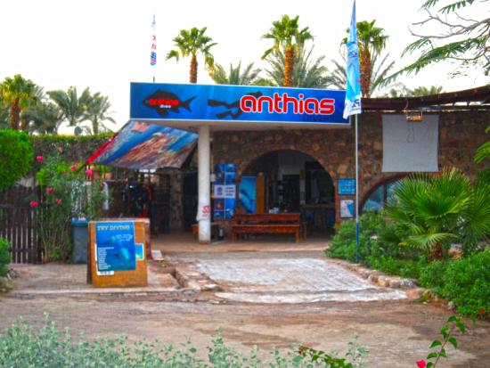 ‪Anthias Divers, Sharm el Sheikh‬