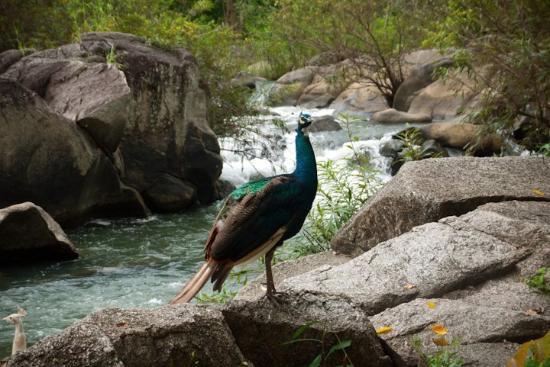 Somdet Phranangchao Siri Kit Park