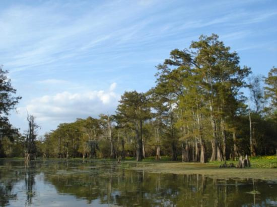Plaquemine, LA: Swamp tour from Sorrell Bayou
