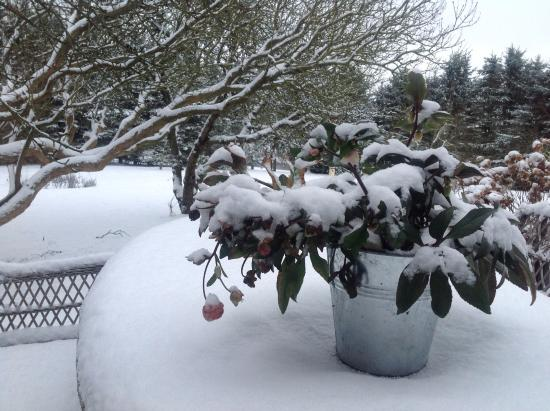 Gilleleje, Denmark: Vinter på terrassen