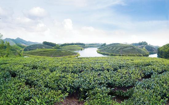 Ethnic Voyage : Tea Discovery