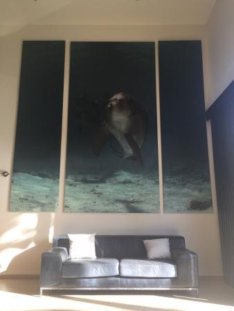 Dolphin Suites: photo0.jpg