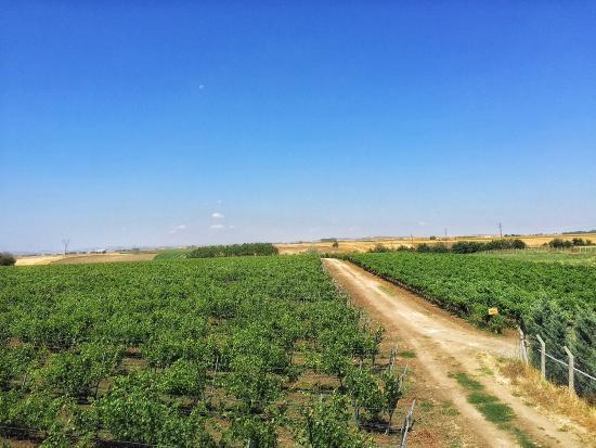 Barel Vineyards