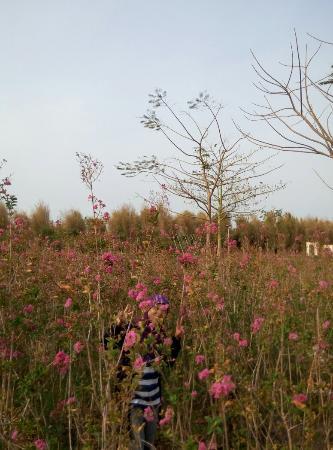 Hutan Bambu dan Taman Sakura Keputih Sukolilo