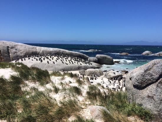 Hermanus, Sudafrica: photo0.jpg
