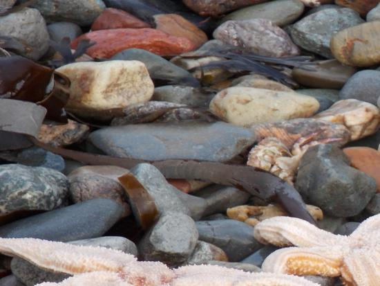 Hydro Hotel: Many of the hundreds of starfish washed up on the beach