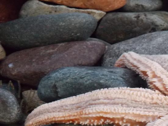 Hydro Hotel: Close up of large Starfish