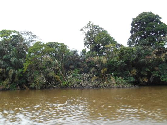 Jungle Tom Safaris Day Tours: Tortuguero National Park-boring and nothing to see