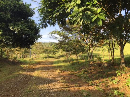 Finca Rio Perla: View up the road