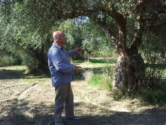 Castella Beach: Spiros is telling us about his Olive