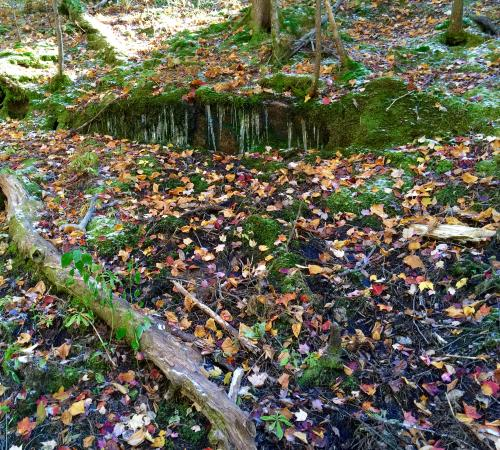 Franconia, NH: Fallen Leaves
