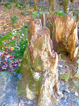 Franconia, Nueva Hampshire: Stumps