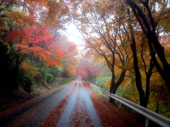 Nara (præfektur), Japan: 信貴生駒スカイライン 秋の雨上がり紅葉