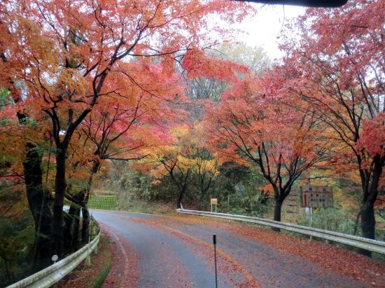 Nara Prefecture, Japón: 信貴生駒スカイライン 雨上がり紅葉