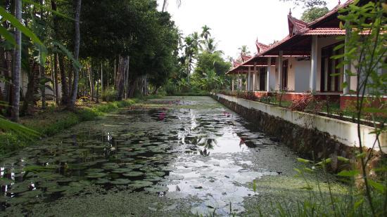 Palmgrove Lake Resort: Rooms with lotus pond next to them.