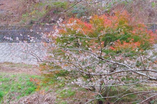 Obara Fureai Park / Shikizakura: photo1.jpg