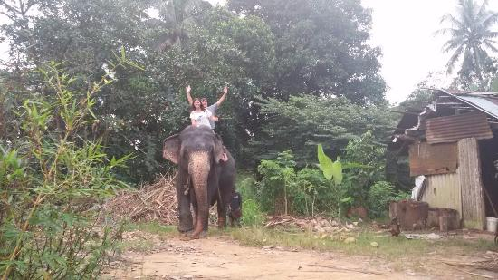 Bentota, Sri Lanka: Elephants