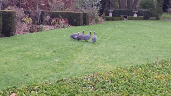 Titley, UK: garden