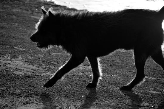 Costa Lanta : Resorthund