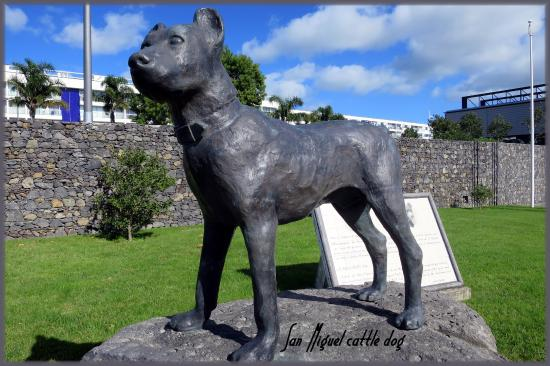Sao Miguel Cattle Dog Statue