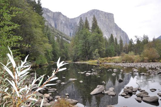 Yosemite picture of yosemite valley lodge yosemite for Yosemite valley cabins