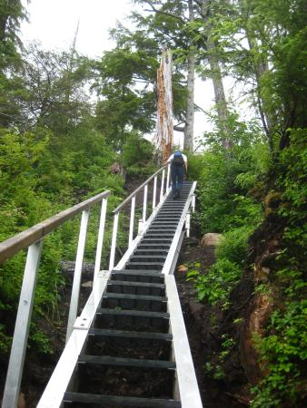 Craig, AK: New set of stairs on the trail.