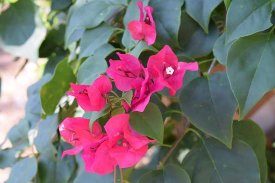 Flowers Bloom Picture Of Sanctuary Rv Resort Bonita Springs
