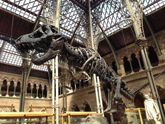 Oxford Natural History Museum Dinosaurs