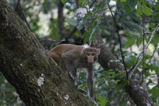 BK Adventures: Monkeys on Silver River Kayak Tour - Florida