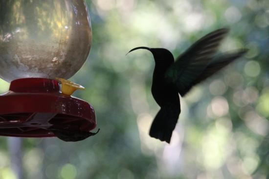 20151020 060926 photo de au jardin des for Au jardin des colibris