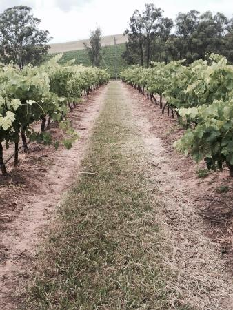 Gabriel's Paddocks Vineyard: photo2.jpg