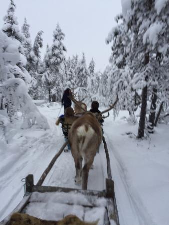 Davvi Arctic Lodge: photo2.jpg