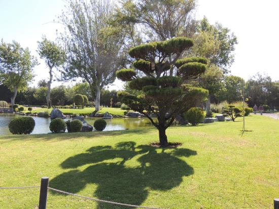 Foto de jardin del corazon la serena hermosos rboles for Arboles sombra jardin