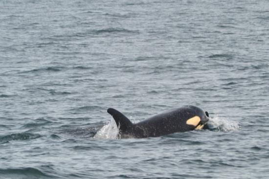 Puget Sound Express - Day Trips: We could hear him breathing!