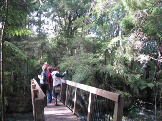 Tops Adventure Tours - Day Tours: The walk at Pupu Springs