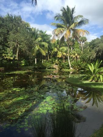 Tropical Garden Picture Of Mckee Botanical Garden Vero Beach Tripadvisor