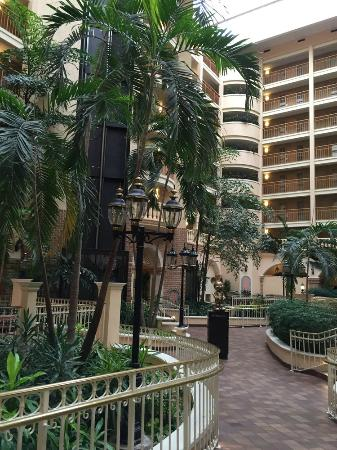 Embassy Suites by Hilton Orlando - International Drive / Convention Center : pic