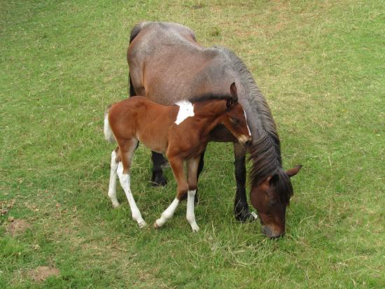 Oyster Bay Lodge : Pferde zum Reiten