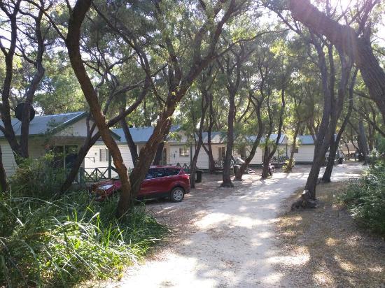 Hamelin Bay, Avustralya: IMG_20151127_073613_large.jpg