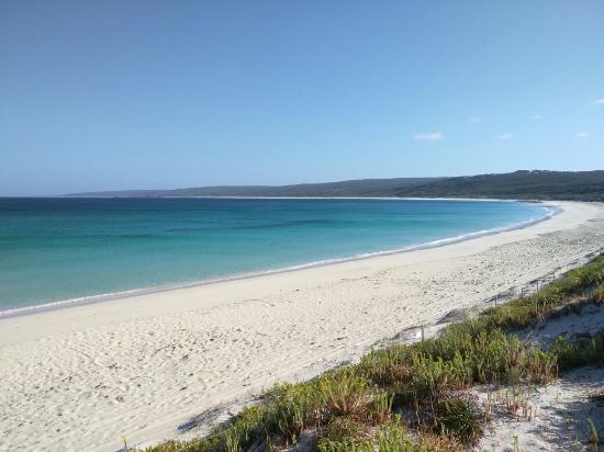 Hamelin Bay, Avustralya: IMG_20151127_073028_large.jpg