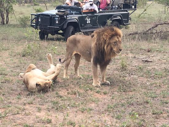 Londolozi Private Game Reserve, Afrika Selatan: Magical moments at Londolozi