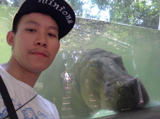 Dusit Zoo: ฮิปโป