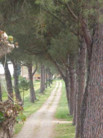 Panicarola, Italien: viale