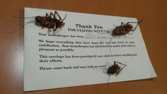 American Inn: I used the tip card to throw away the pests.