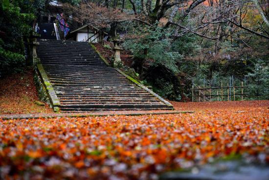 Gakuenji Temple: 紅葉