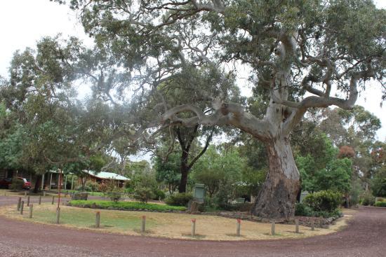 Dunkeld, Australië: les jardins