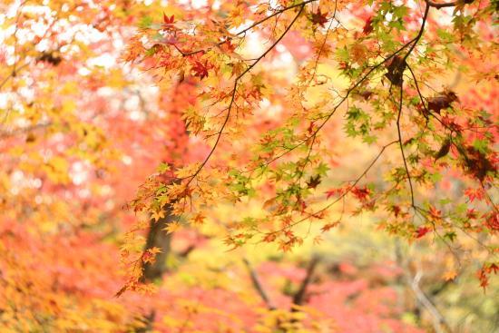 Takahagi, Japonya: Завораживающая красота