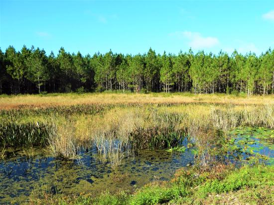Polk City, FL: Marshland along trail