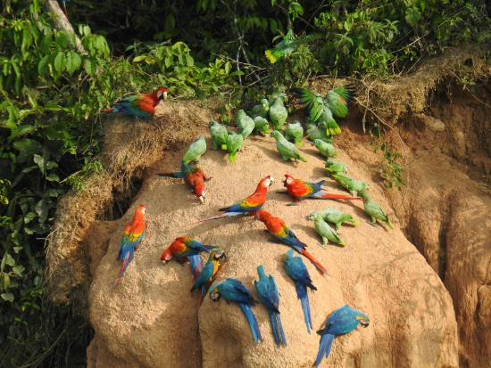 Clay lick for birds