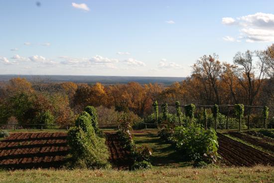 Charlottesville, Βιρτζίνια: Garden